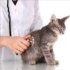 Ветеринарные клиники в Елово